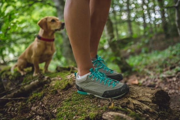 Stivali da escursionista sul registro degli alberi