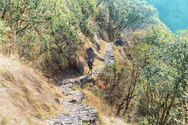 Escursionista nelle giungle himalayane, nepal, regione del kanchenjunga
