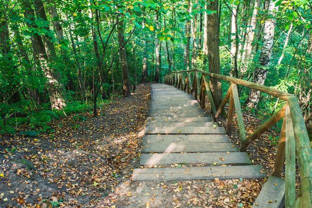 Escursionismo giù per le scale di legno su un sentiero nel bosco nella foresta. sentiero escursionistico nella foresta profonda.