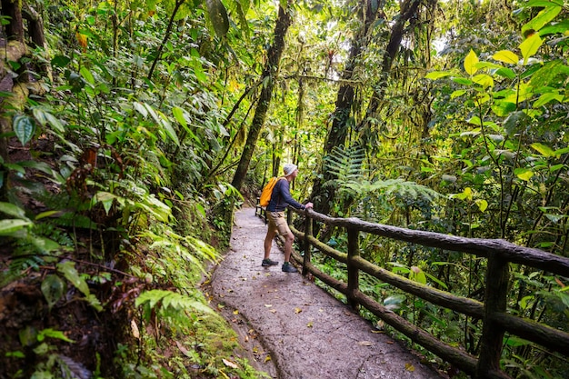 Escursioni nella verde giungla tropicale, costa rica, america centrale