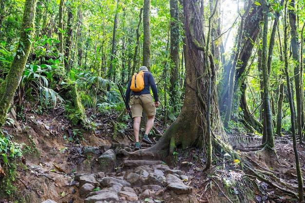 Escursioni nella verde giungla tropicale, costa rica, america centrale Foto Premium