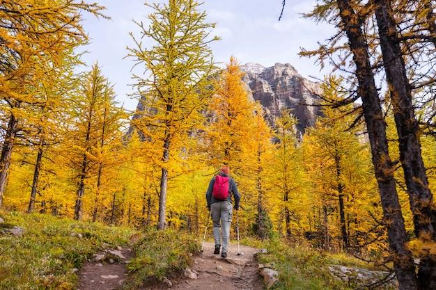 Uomo di escursionismo nelle montagne canadesi. l'escursione è l'attività ricreativa popolare nel nord america. ci sono molti sentieri pittoreschi.
