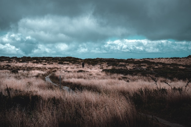 Un uomo che fa un'escursione che cammina sul sentiero con erba gialla su un'alta montagna. scena di pioggia nuvolosa e doccia.