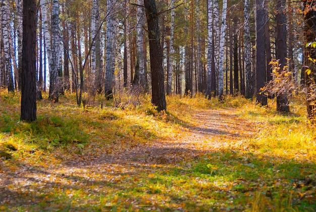 Sentiero escursionistico nella foresta selvaggia di autunno