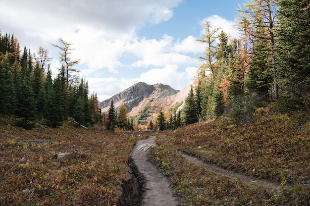 Sentiero escursionistico con montagne rocciose nella foresta di autunno al parco provinciale, canada
