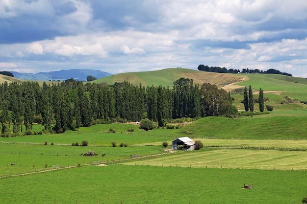 Colline e campi della nuova zelanda