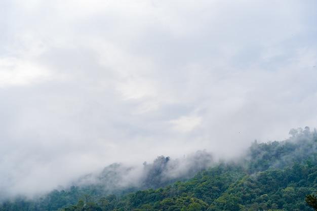 Colline con giungla in nepal, coperte di nebbia. paesaggio con foresta pluviale tropicale. immagine di riferimento per il disegno cg, pittura opaca. foto d'archivio.