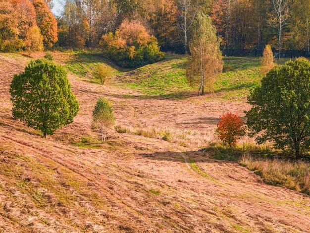 Paesaggio collinare autunnale di un campo falciato con alberi radi in una giornata di sole.