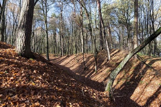 Territorio collinare nella foresta a fine autunno, alberi spogli senza fogliame