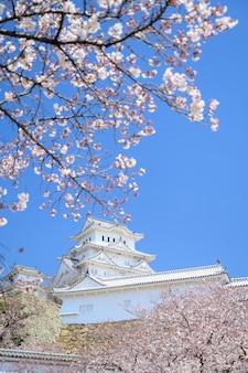 Castello di himeji con cielo blu e sakura o fiori di ciliegio in primo piano.