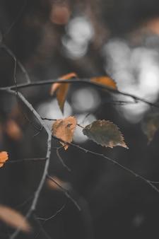 Hojas de color naranja y marron en la rama de un arbol con el fondo desenfocado