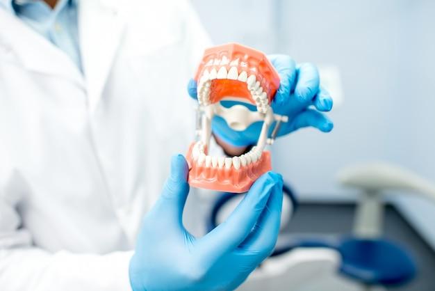 Tenere una mascella artificiale nello studio dentistico