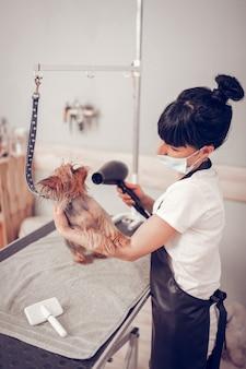 Tenendo cane carino. lavoratore del salone di toelettatura che tiene in mano un cane carino e lo asciuga dopo il lavaggio