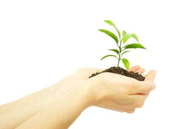 Tenendo una pianta tra le mani su bianco
