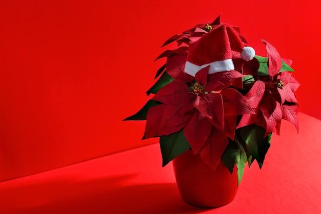 Composizione di festa dal bel fiore rosso poinsettias come simbolo del natale e cappello di babbo natale in alto