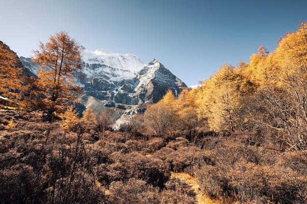 Montagna santa di xiannairi nella foresta di pini di autunno alla riserva naturale di yading