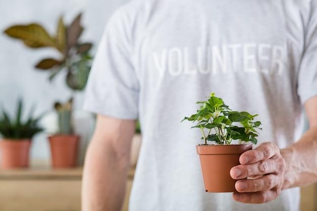 Flora domestica. concetto di protezione della natura. mani volontarie che tengono pianta d'appartamento.