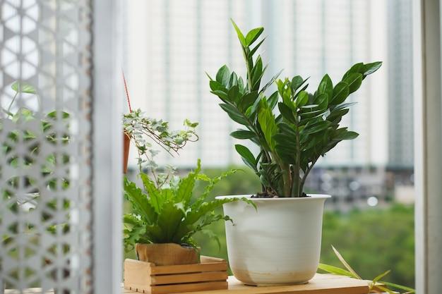 Concetto di casa e giardino con zanzibar gem. pianta d'appartamento su edificio
