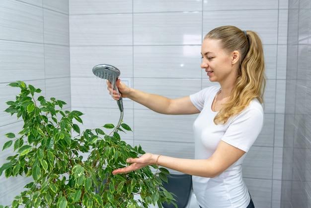 Giardinaggio domestico. giardiniere femminile caucasico lava un grande fiore al coperto in bagno. annaffiare e prendersi cura delle piante. aria pulita in casa. la casalinga crea conforto. amore per gli alberi di ficus. hobby di pulizia.
