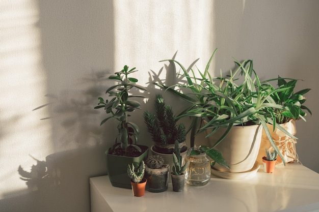 Concetto di giardinaggio domestico con varie piante in vaso, piante grasse, muro bianco