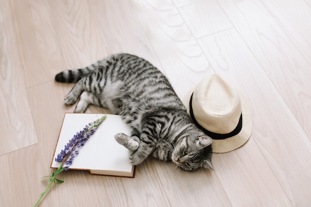 Gatto domestico carino gattino sdraiato a casa gatto dritto scozzese carino in casa ritratto di gatto gatto carino tiro al coperto