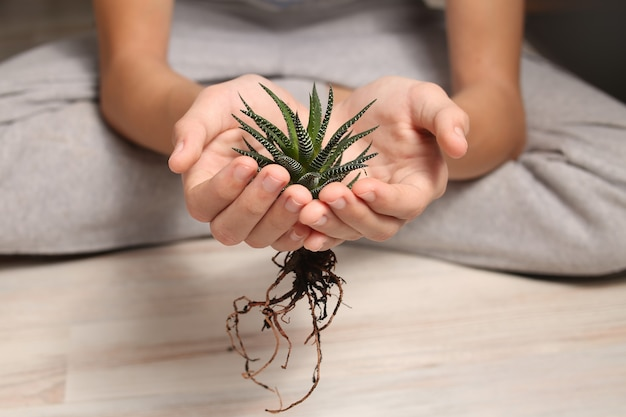Home pianta succulenta haworthia close-up nelle mani