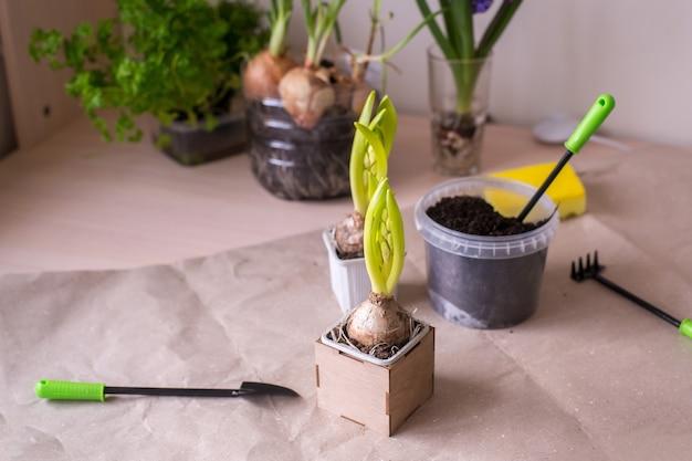 Vasi per piante da casa e attrezzi da giardinaggio