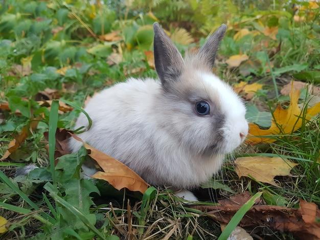 Coniglio domestico sul prato vicino alla casa.