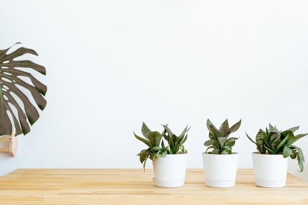 Sfondo di natura morta domestica. modello, modello. interni semplici e moderni accoglienti con pianta verde. progettare l'arredamento della casa.