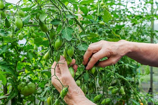 Homegrown, giardinaggio e concetto di agricoltura.