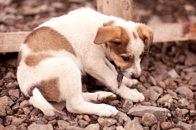 Un piccolo cane marrone senza casa che mangia qualcosa per terra.