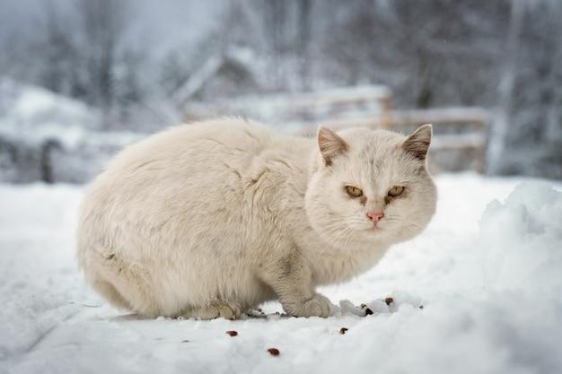 Il gatto senzatetto mangia cibo secco nella neve in una gelida giornata invernale