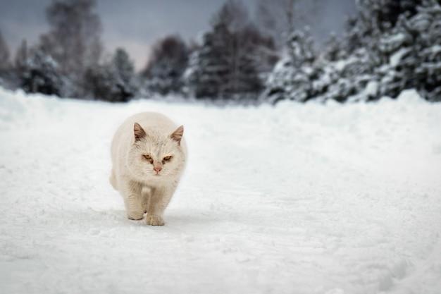 Il gatto senzatetto corre lungo una strada del villaggio ricoperta di neve in una gelida giornata invernale