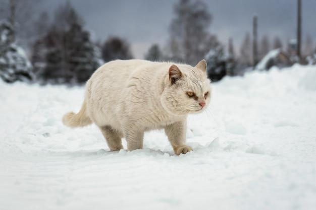Il gatto senzatetto corre lungo una strada del villaggio coperta di neve in una gelida sera d'inverno