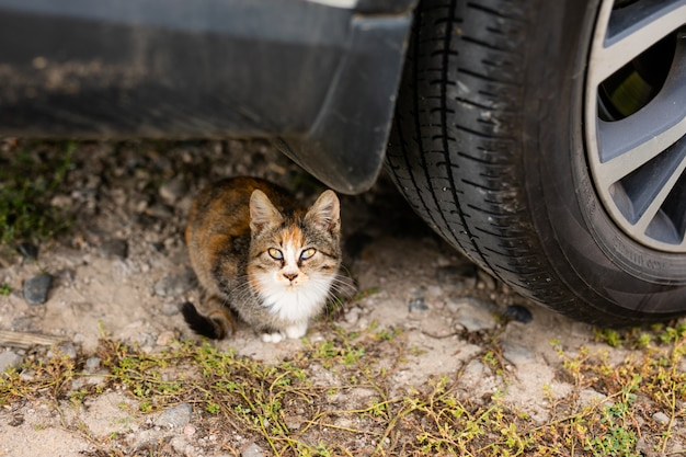 Gatto senzatetto senza razza in rifugio per una passeggiata sulla strada