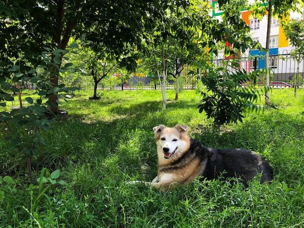 Un cane senza casa riposa in giardino sull'erba verde.