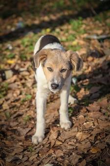Senzatetto cagnolino che guarda dritto nella foresta impura in autunno.
