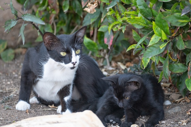 Gatto mamma senza casa con gattino. animali senza casa. mamma gatta con il suo gattino. madre senzatetto con il suo bambino in strada. il piccolo gattino bianco e grigio spaventato coccola il gatto