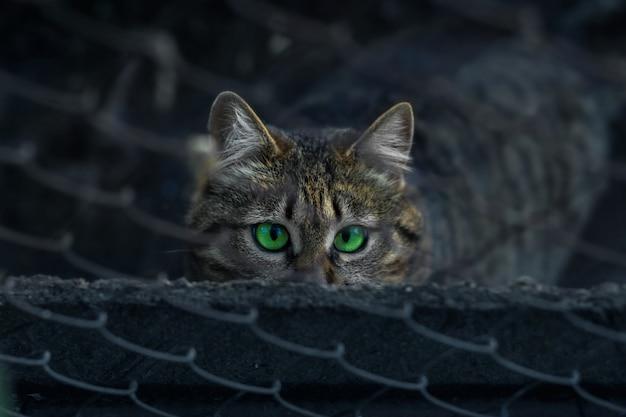 Senzatetto tabby cat si siede dietro una recinzione e guarda con occhi verde brillante