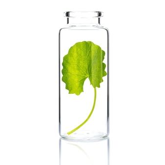 Cura della pelle fatta in casa con centella asiatica in una bottiglia di vetro isolata su bianco.