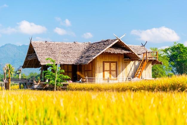 Famiglia nella foresta casa fatta di bambù a chiang dao chiangmai thailand
