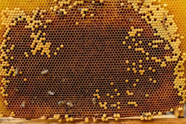Honey bee su nido d'ape. primo piano delle api sul favo in arnia nel fuoco selettivo di estate, spazio della copia