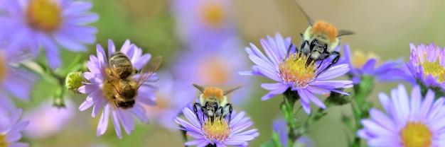 Honeybee raccolta di fiori di colore rosa in un giardino