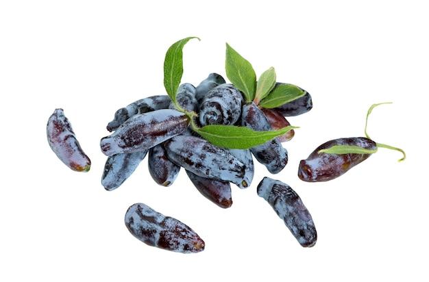 Bacche e foglie del caprifoglio isolate su fondo bianco. blue honeysuckle berry (lonicera caerulia), woodbine.