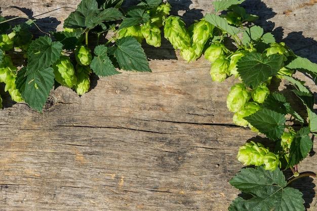 Coni di luppolo su fondo di legno rustico. ingrediente per la produzione di birra. vista dall'alto con copia spazio