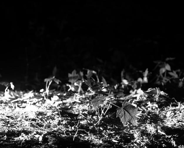 Priorità bassa orizzontale del bokeh dell'erba in bianco e nero hd