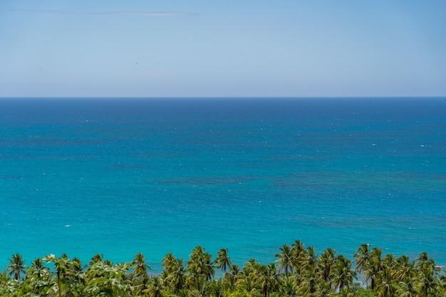 Linee orizzontali di cielo, acqua di mare blu e fila di palme con copyspace. immagine di sfondo con spazio di copia. foto di alta qualità