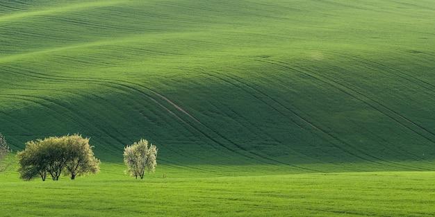 Panorama orizzontale con campo verde
