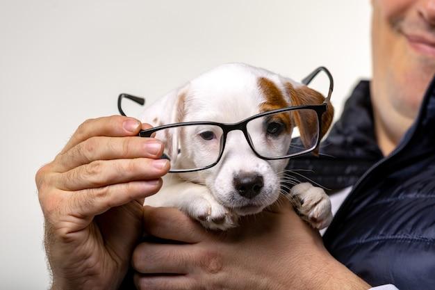 Il ritratto orizzontale di un bell'uomo allegro tiene jack russell terrirer e prova gli occhiali a un cane, ha un'espressione felice