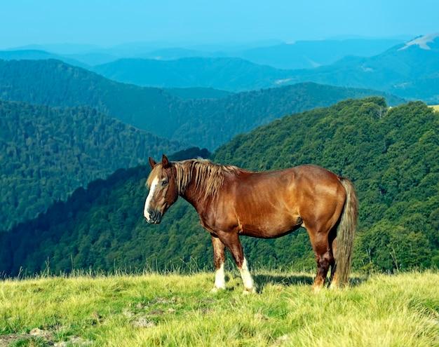 Cavallo su uno sfondo di montagna